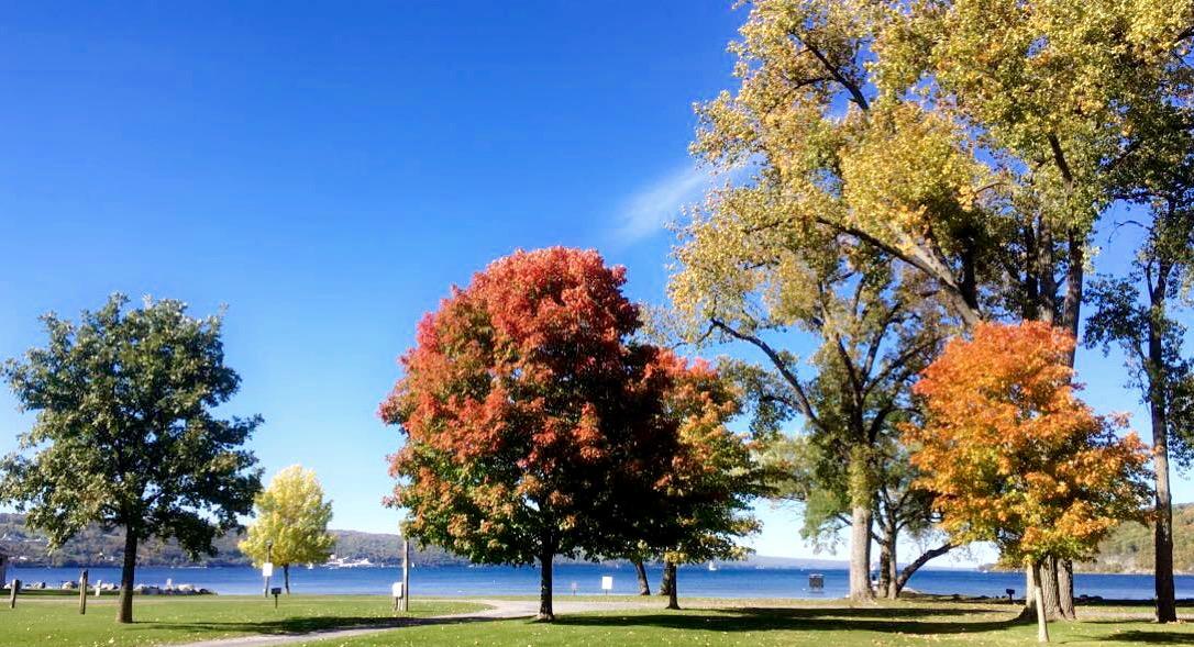 Fall foliage at Mendon Ponds Park