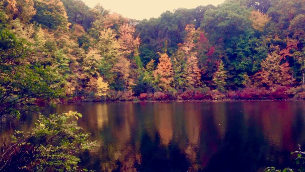 Fall foliage at Seneca Lake State Park