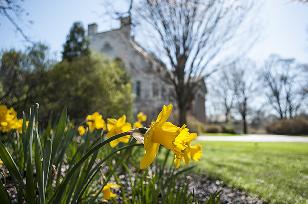 Daffodils in front of Eastman House
