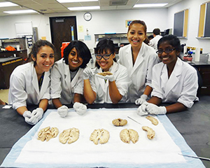Students dissect specimens together in class